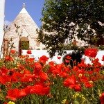 Trullo poppies